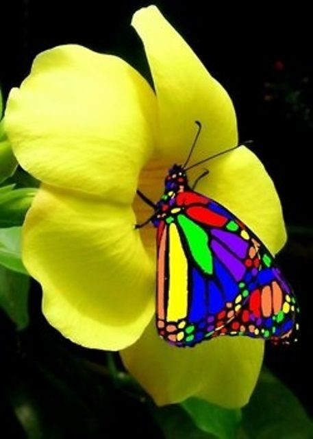 Stained Glass Rainbow Color Butterfly On Yellow Flower Detail