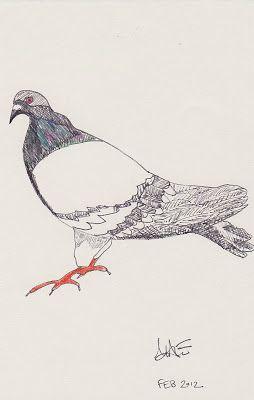 five minute pigeon