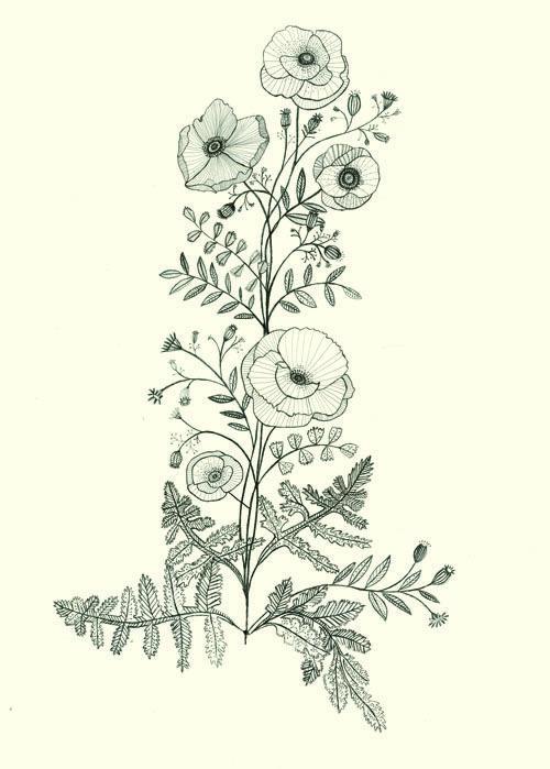 Poppy Line Drawing Tattoo : Poppy plant a tattoo design for client katt frank