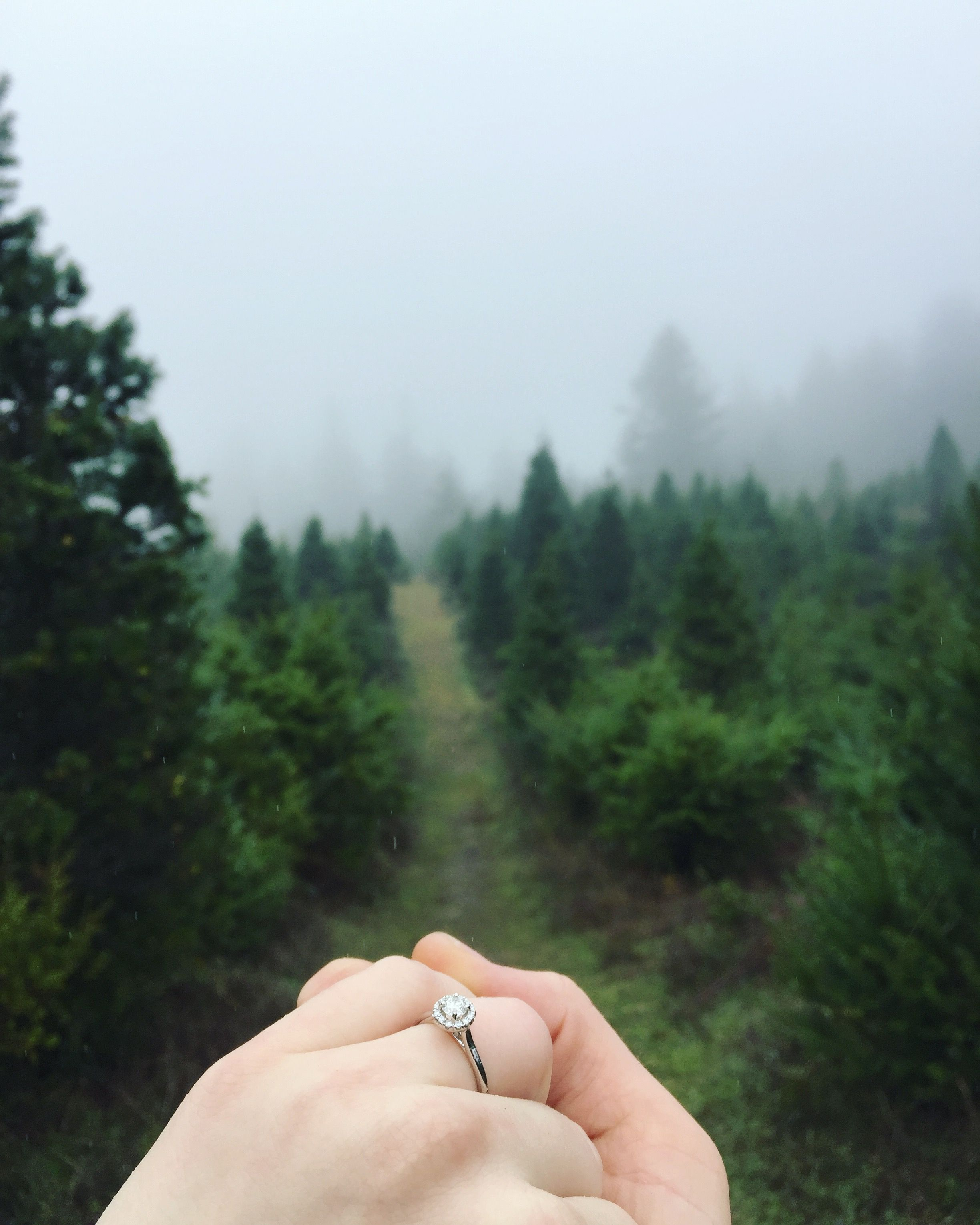 just got engaged to the love of my life in the santa cruz mountains at the most magical christmas tree farm youll ever see absolutely over the moon in