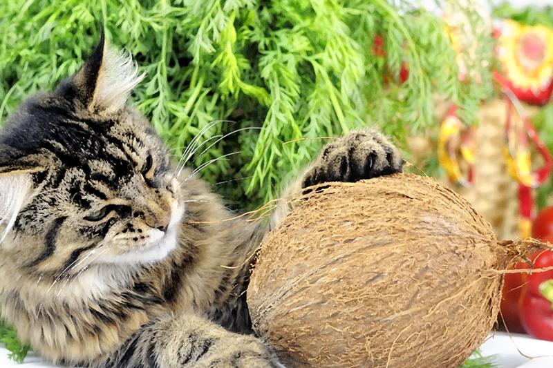 COCONUT VS PINE LITTER A COMPARISON Natural cat litter