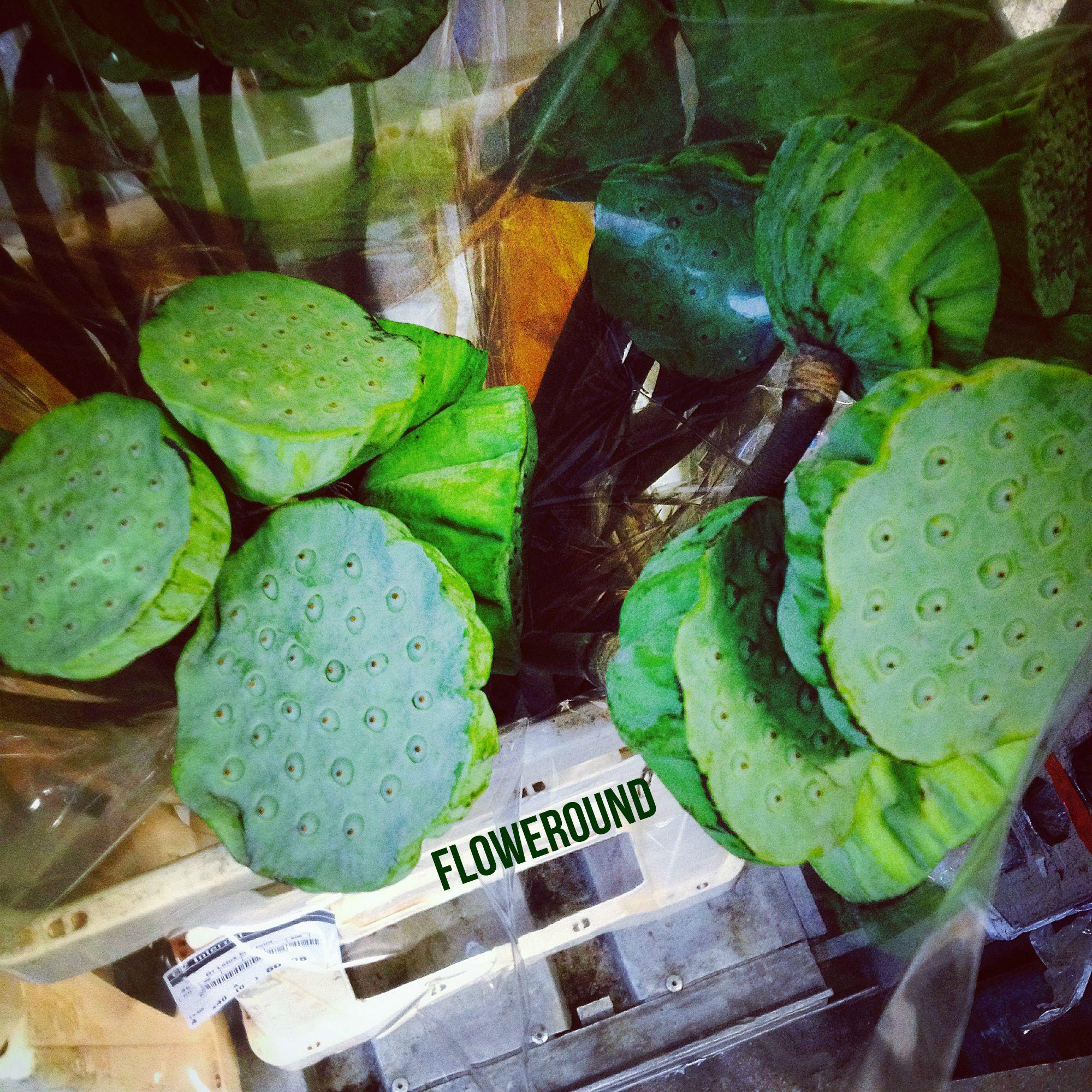 #lotus #cutflowers #green #nature