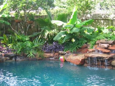 Best pool plants in this swimming pool landscape bananas for Gardens around pools