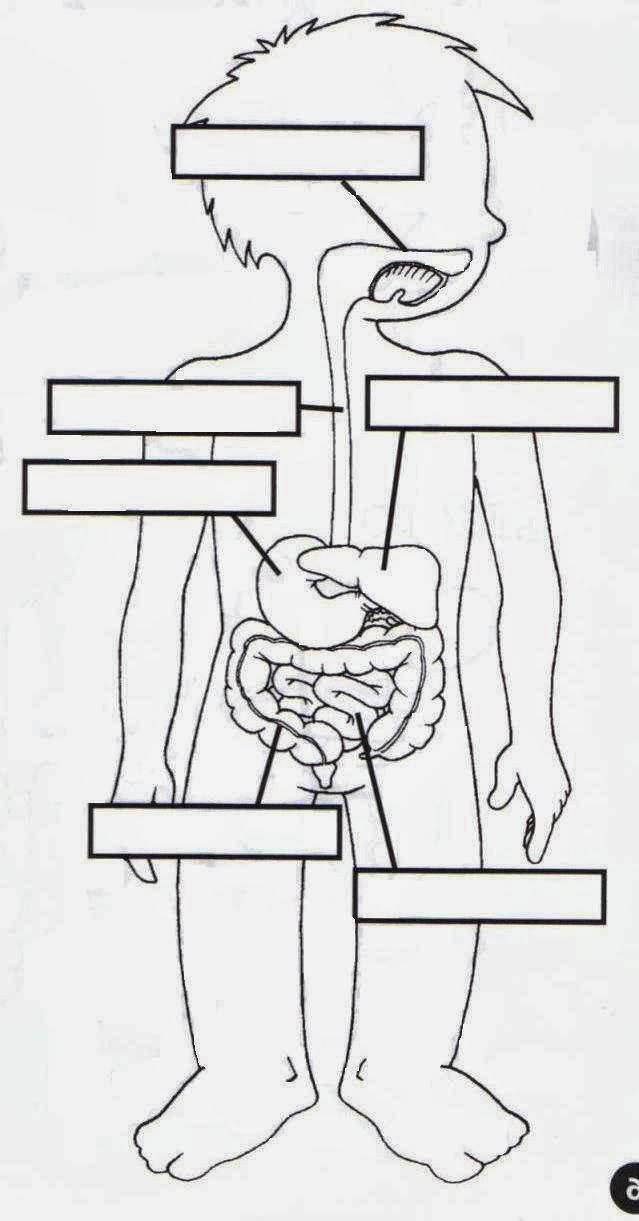 infantil el esqueleto humano - Buscar con Google | FICHAS 1° DE ...