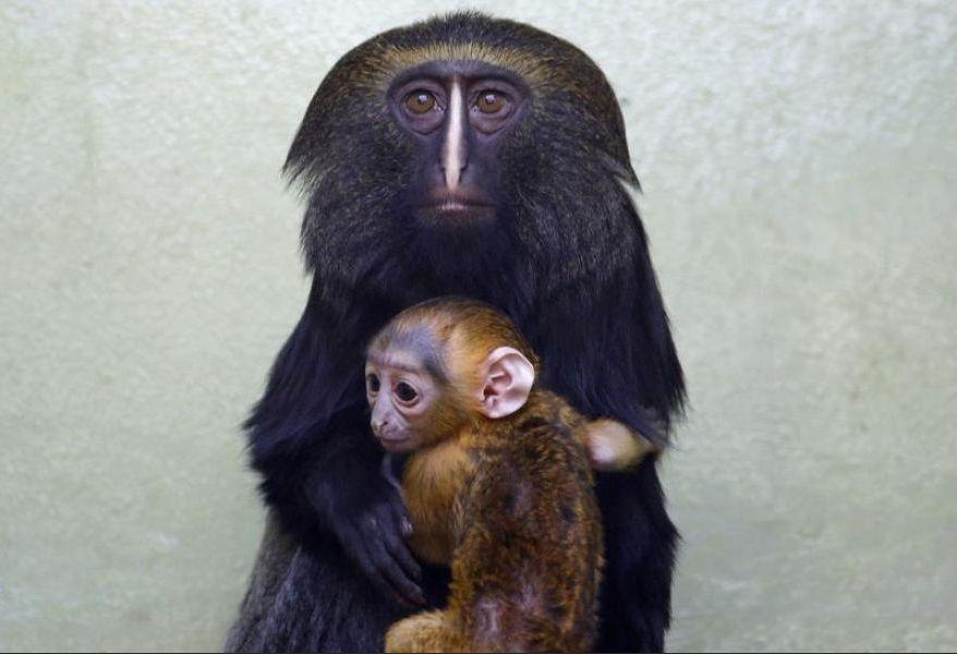 singe hibou | Photo de singe, Singe, Bébés animaux