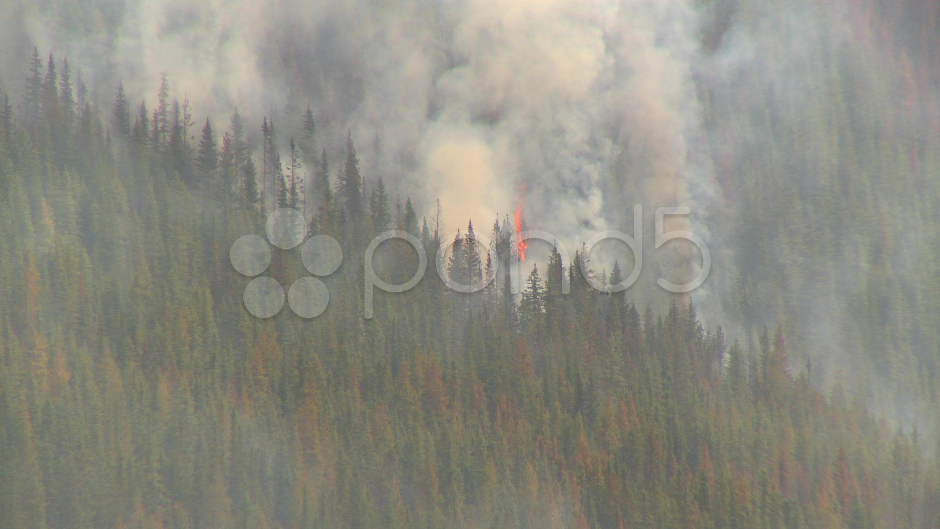 Mountain forest fire, Mt Buller Forest fire, Smoke