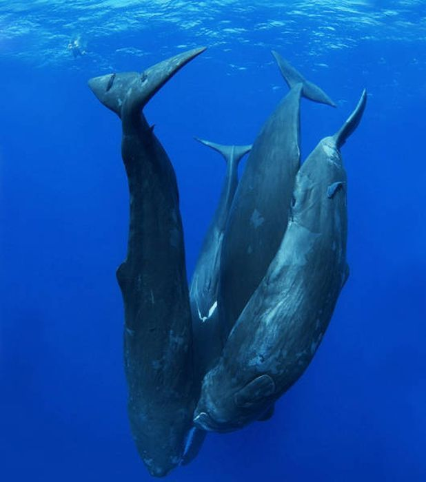 Beautiful Photos Of Whales That Will Take Your Breath Away (62 pics)