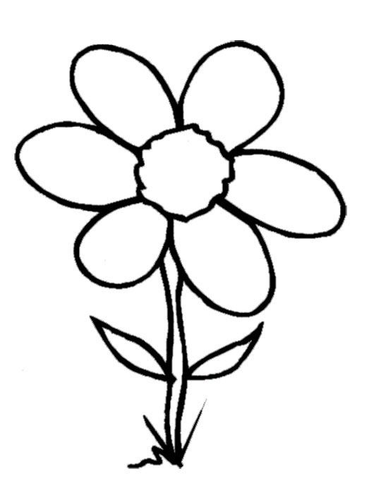 Spring flowers coloring book