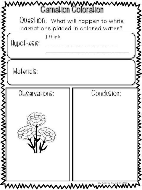 image about Celery Experiment Printable Worksheet named Carnation coloring experiment Clroom recommendations! College