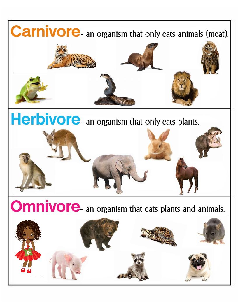 Carnivore, Herbivore & Omnivore Anchor Chart * Jungle