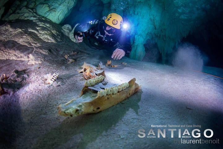 ¿de quien son los dientes que esta a punto de tocar? Foto de Laurent Benoit www.flowcheck.es #buceo #scuba #dive