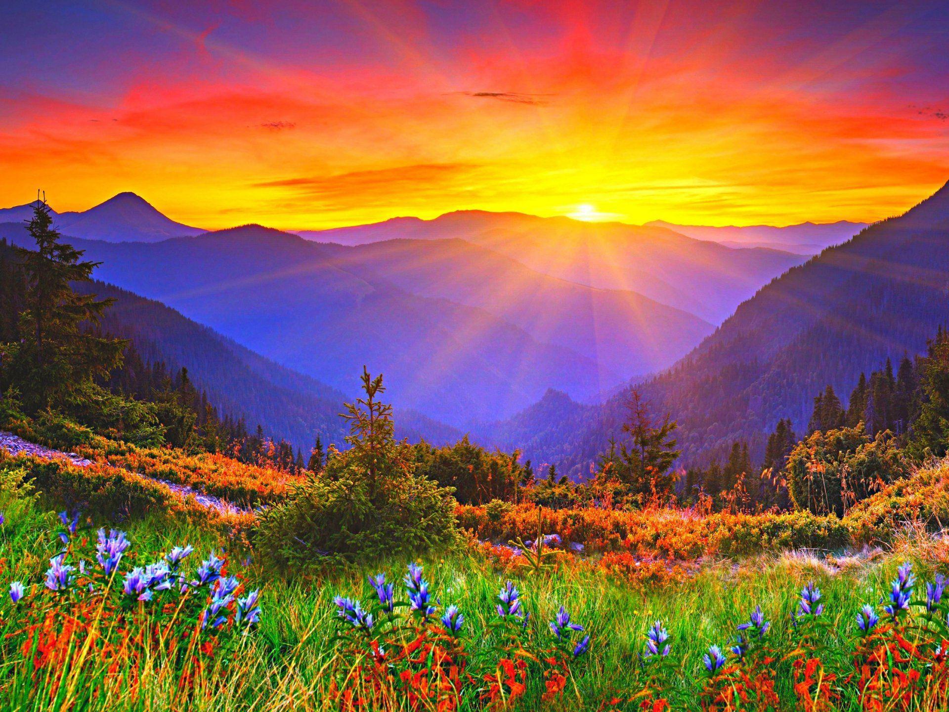 Must see Wallpaper Mountain Flower - 6c12a8c8ffc40723443cdaf2a2be677b  Snapshot_303771.jpg