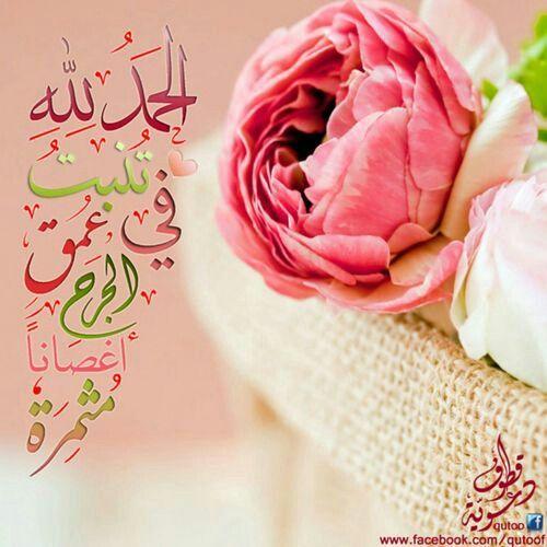 Pin By Amly On Ya Allah يآآرب Ranunculus Flowers Flowers Ranunculus
