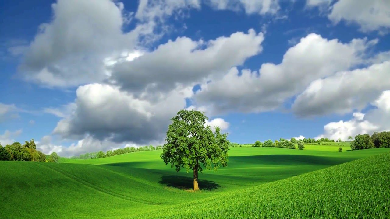 Beautiful Nature Tree Green Field Sky Summer Background Video 1080p Motion Backgrounds Nature Backgrounds Smoke Animation