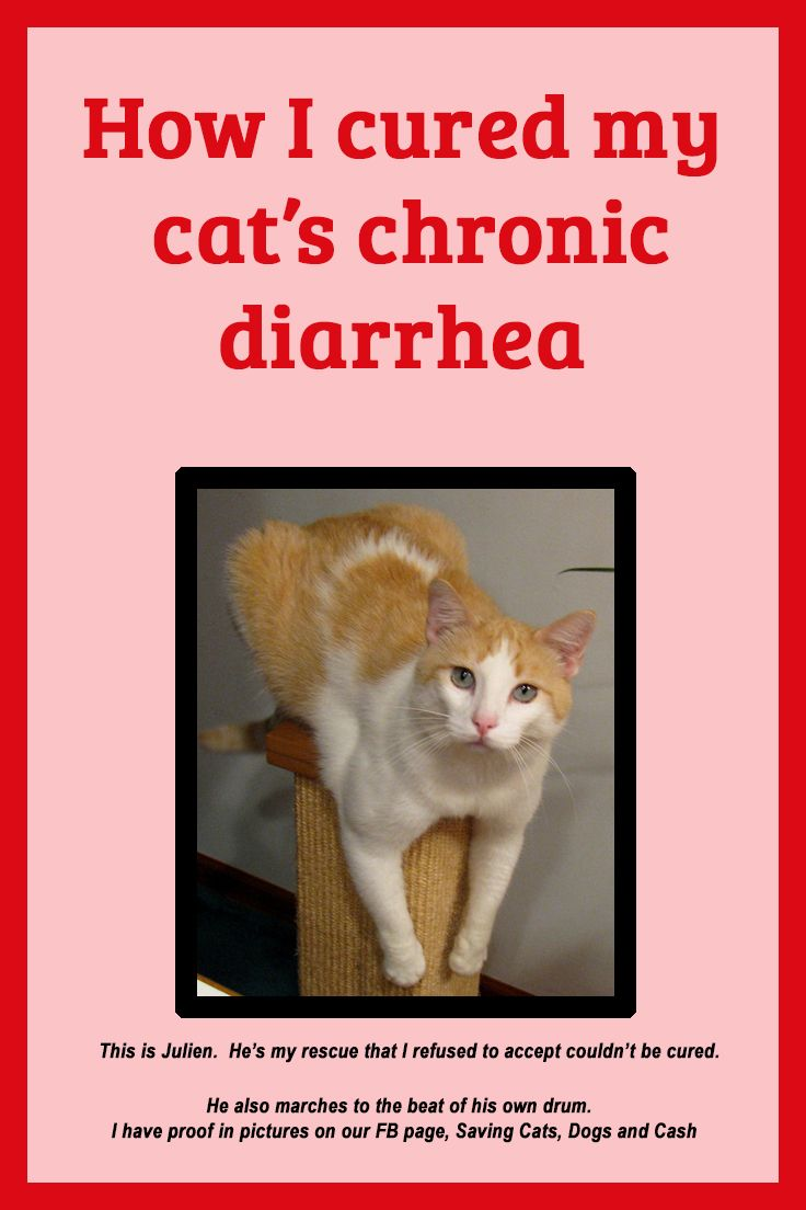 How I cured my cat's chronic diarrhea How to cure