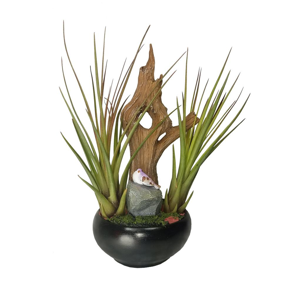 Air Plant Garden In Container Air Plant Garden Air Plants Container Gardening