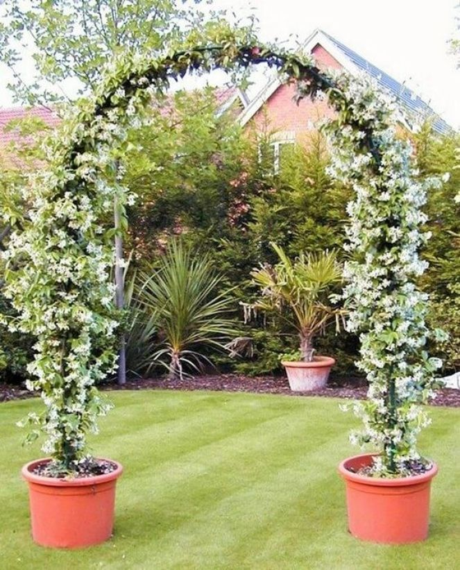 Garden decoration with jasmine the most popular climbing plant