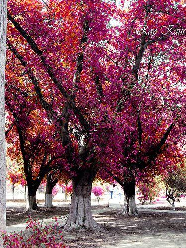 It's Nature's Way Of Celebrating Season Of Love