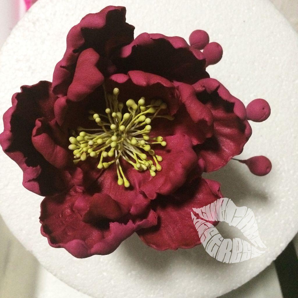 Burgundy Wine colored Sugar flower peony   Cupcake Mistress PH ...