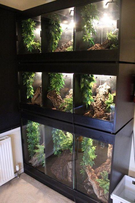 Ingaborg Desmore Custom Reptile Cage Reptiles #cage