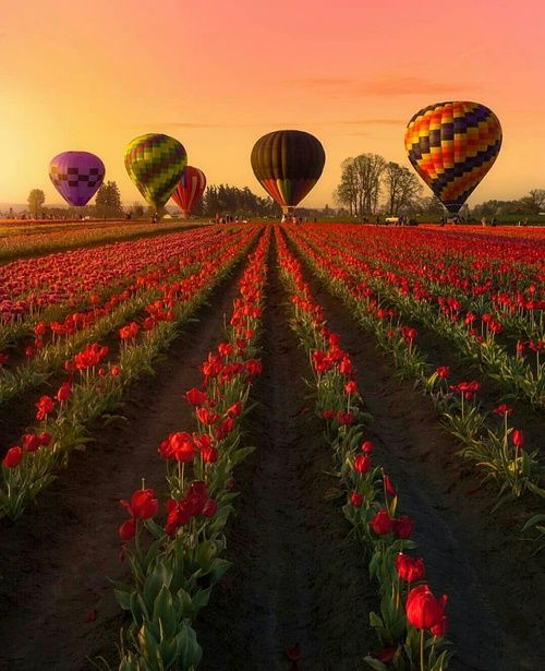 Imagen de beautiful, flowers, and nature