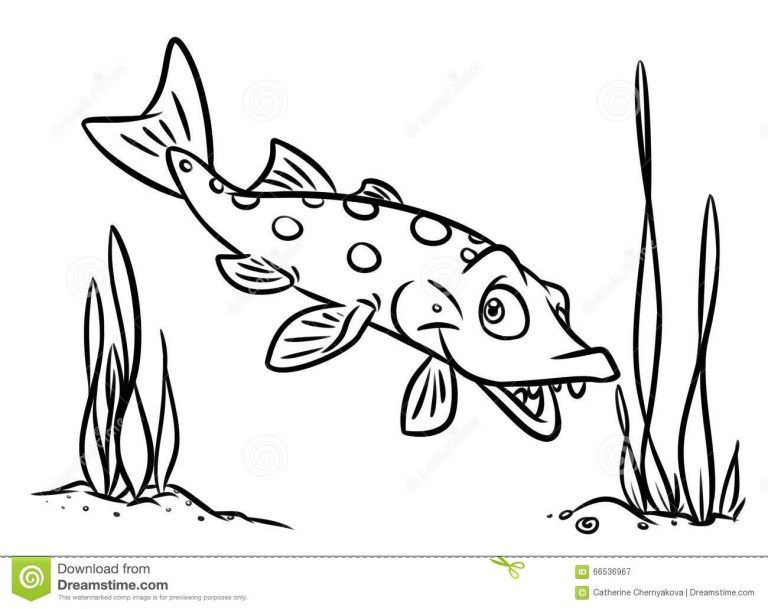 Fish Pike Coloring Pages Stock Illustration Illustration Of Fish Within Pike Fish Coloring Pages