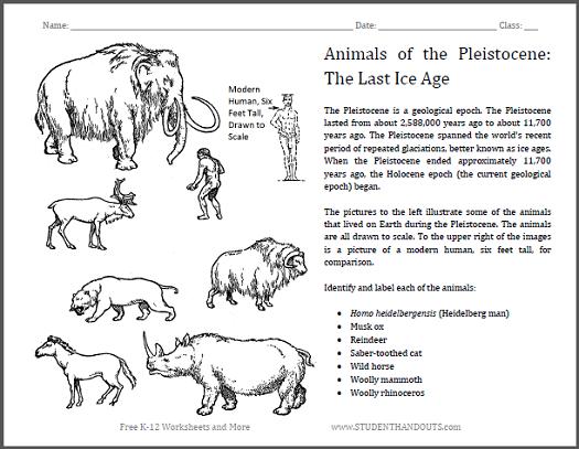 Identify Pleistocene Epoch Animals Worksheet Students