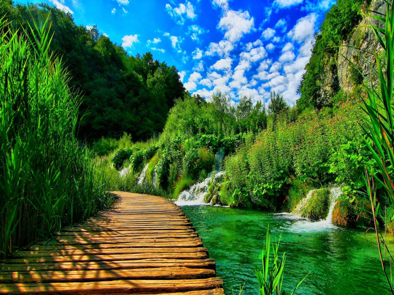 Hd wallpaper nature green - Green Nature Wallpaper Images Hd Desktop Mobile 8729832 Wallpaper
