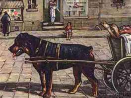Carting What Rottweilers Were Originally Bred For In Rottweil