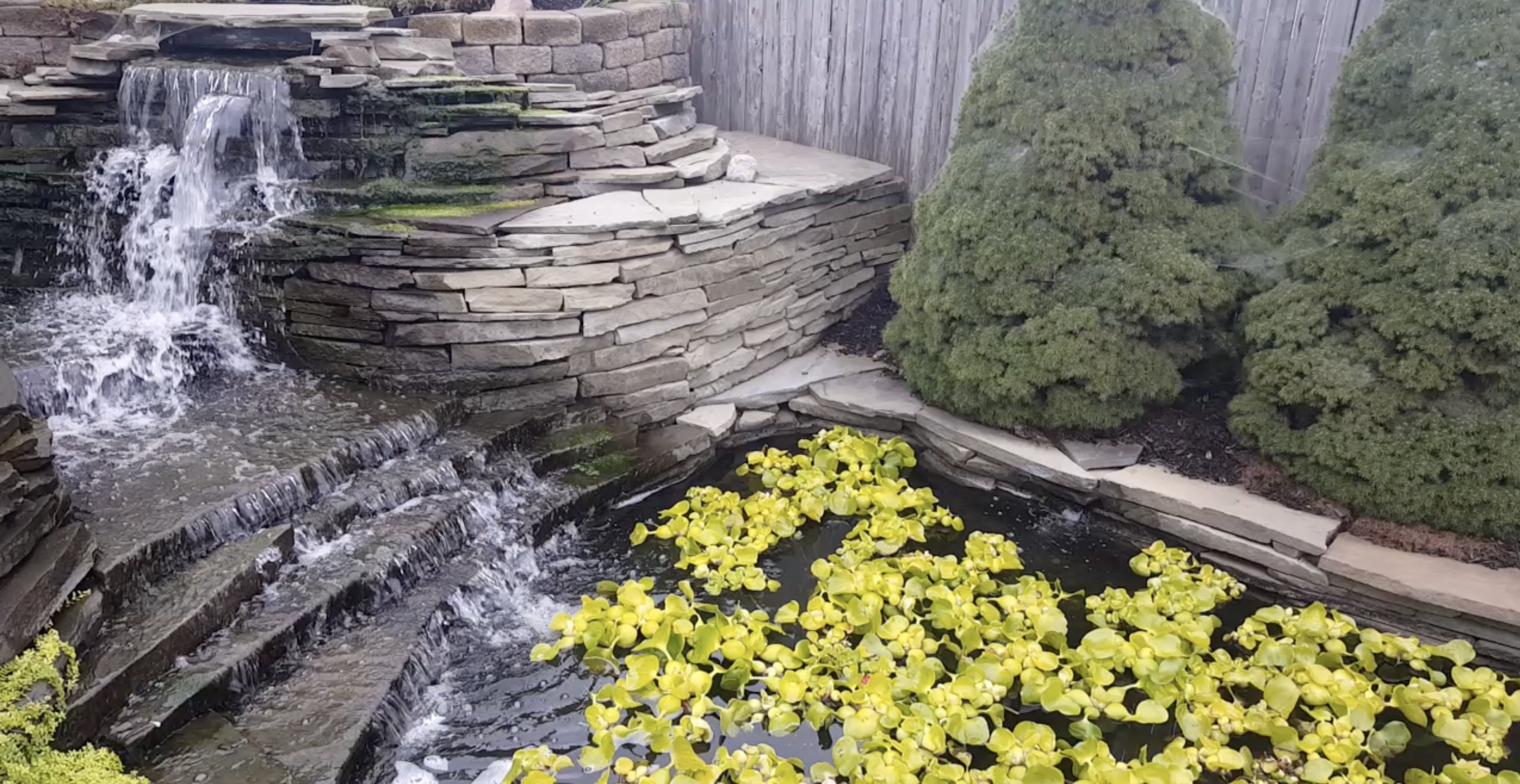How Much Does A Koi Pond Cost Water Garden Pond Water Features Pond
