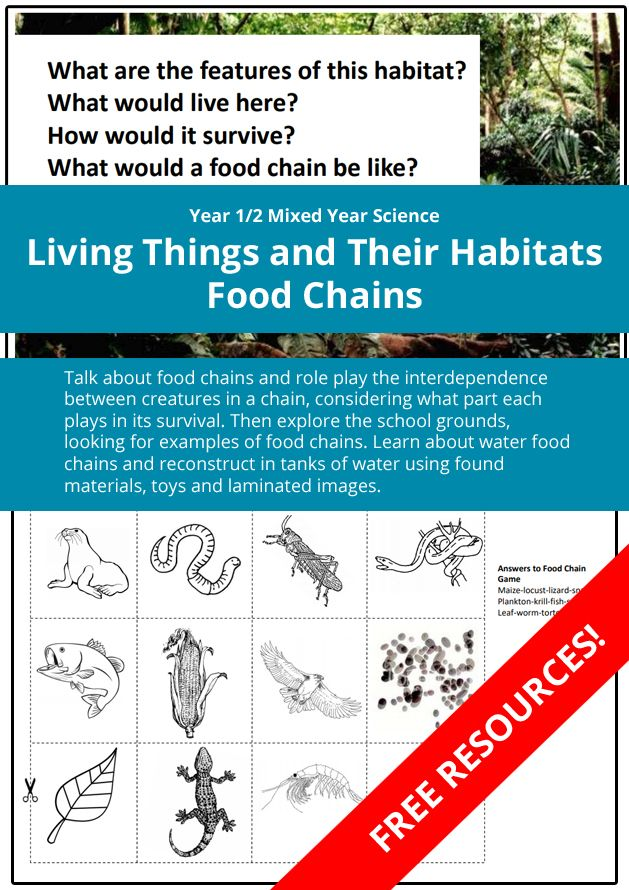 Year 1/2 Mixed Year Science Living Things and Their