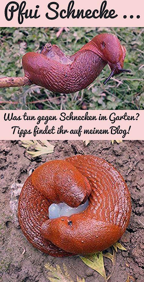 Photo of Tipps gegen Schnecken im Garten – grüneliebe