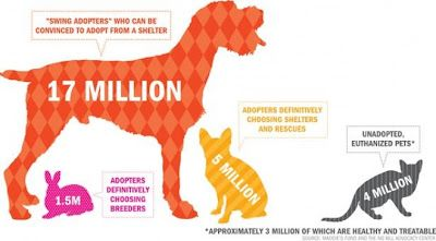 Applied Visual Analytics Clarifying The No Kill Shelter Stats Adoption Animal Advocacy Buy Puppies