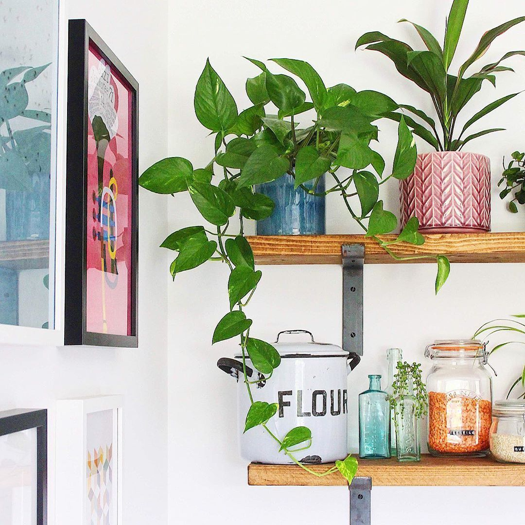 golden pothos plant shelfie plant display trailing plants ...