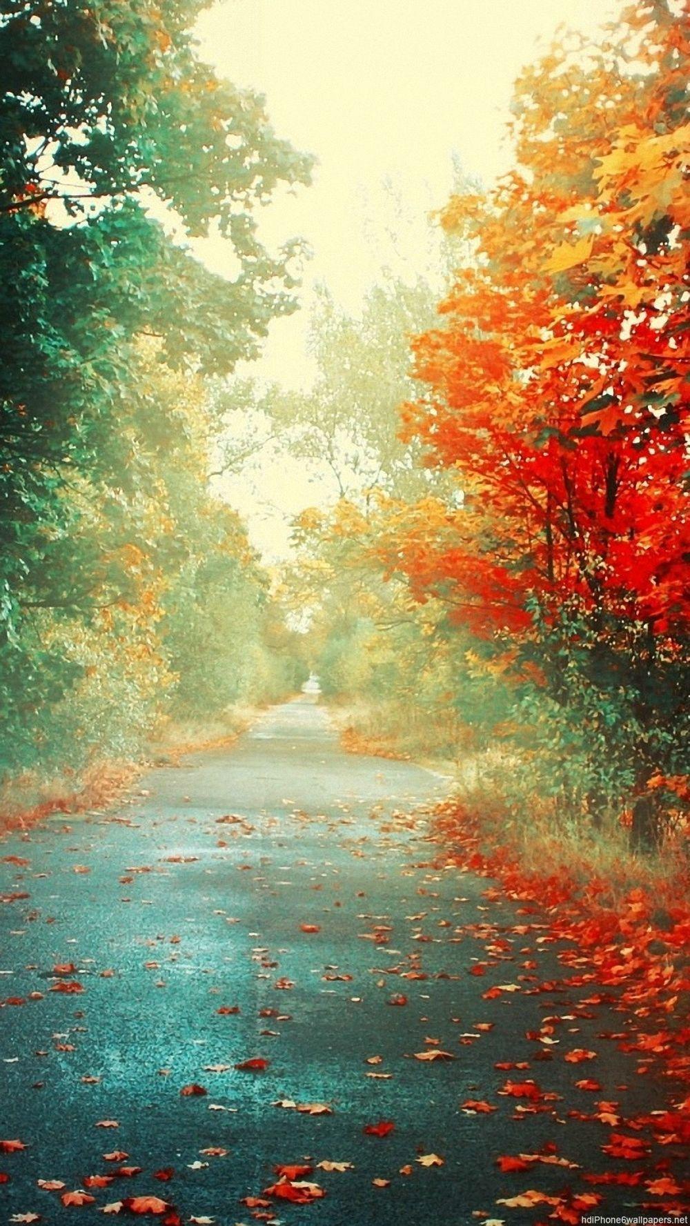 画像 紅葉 秋 Iphone8 7 6s 6用 秋にぴったりの紅葉の壁紙