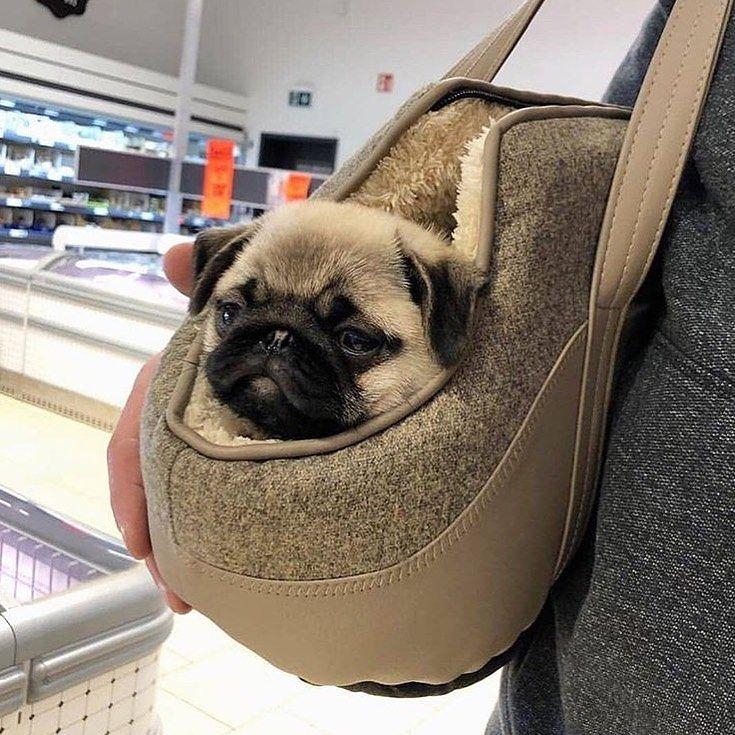 Pin By Mc Baby Ash On I Love Pugs In 2020 Cute Pugs Cute Pug