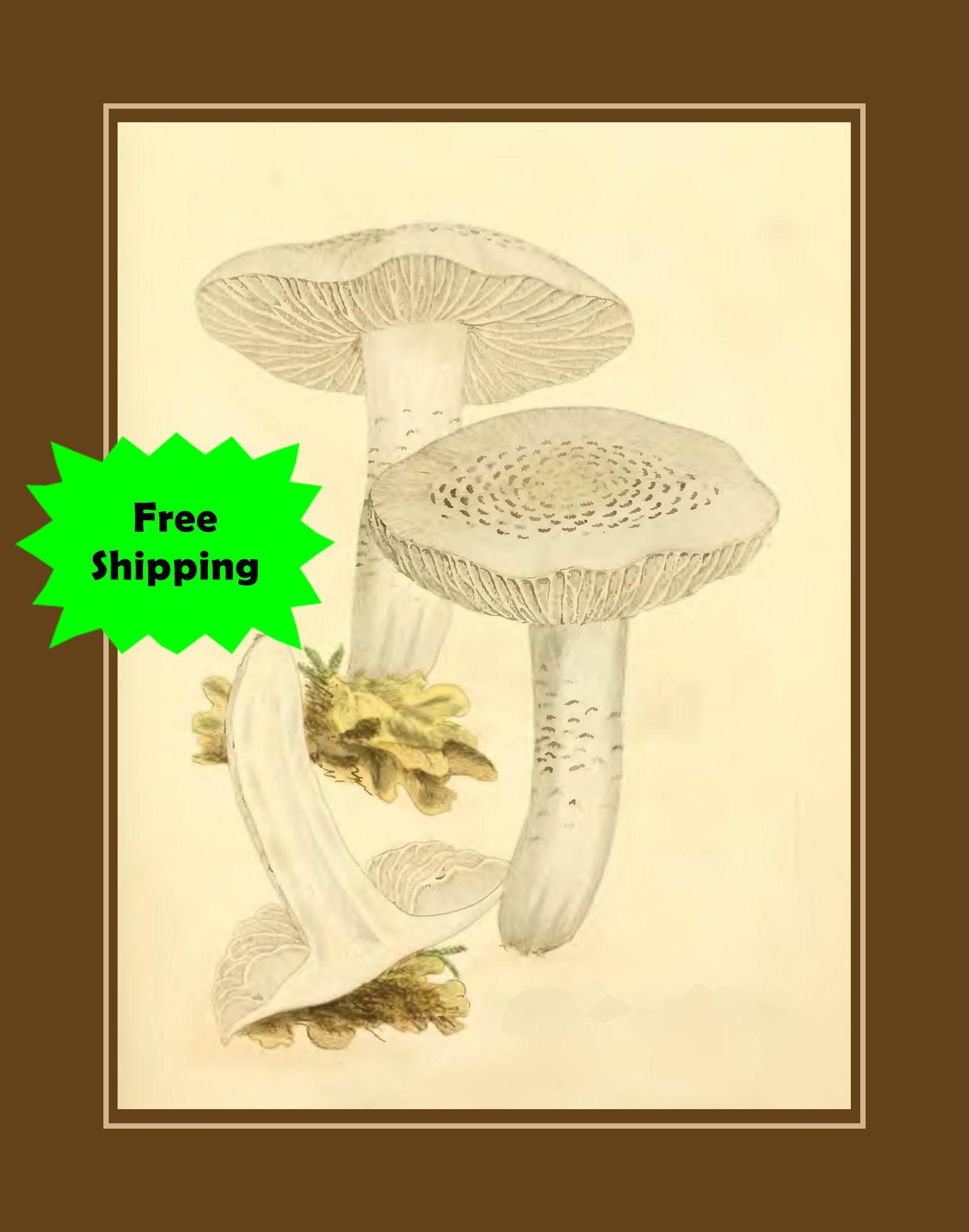 Mushroom Sketch Bathroom Wall Art, Bathroom Art Poster, Kitchen ...