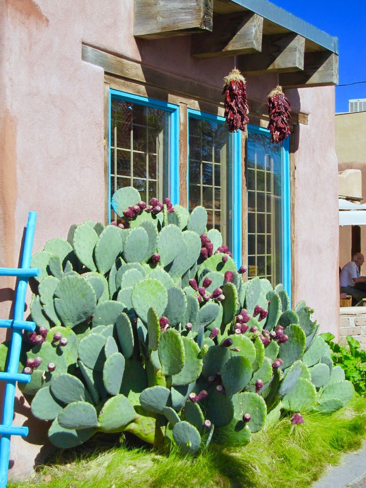 Pin By Hdi 19 On Southwest House With Images: New Mexico Homes, New Mexico Santa Fe, Xeriscape