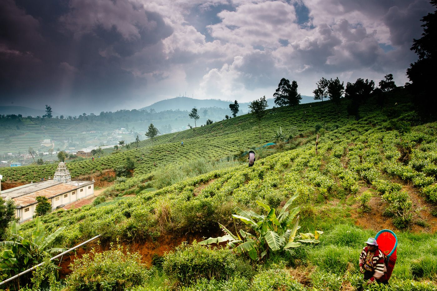 A Tea Lover S Trip In Sri Lanka S Hill Country Home Of The Finest Tea Gardens In The World Here I Met Pluckers And In 2021 Cool Places To Visit Sri