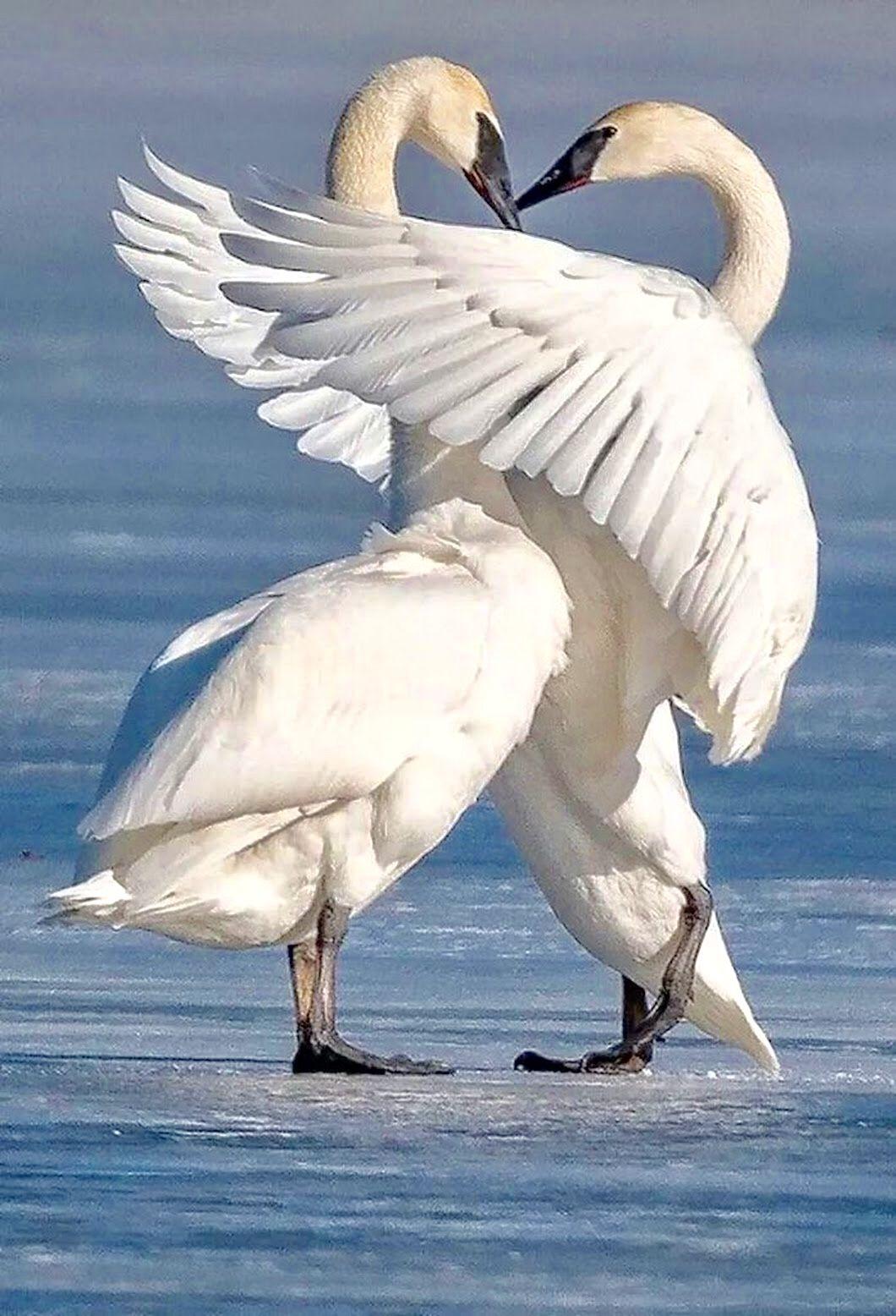 μεγάλο πουλί tmblr