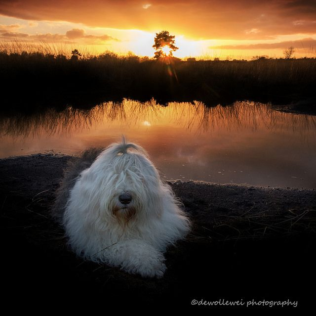 Sophie's sunset... | by dewollewei
