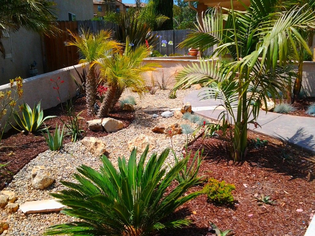 Drought tolerant landscape design idea with palms agave for Garden ideas for patio areas