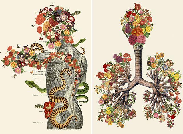 Анатомия человека в цвете картинки