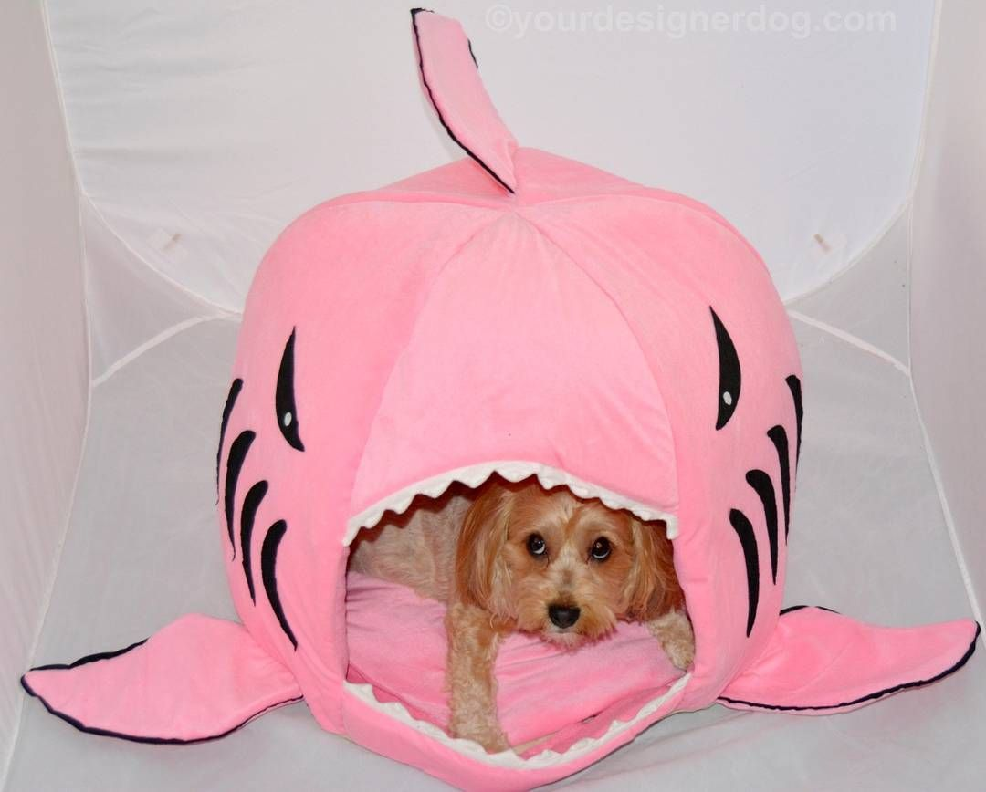 Watch out Sadie! That pink shark looks hungry! SharkWeek