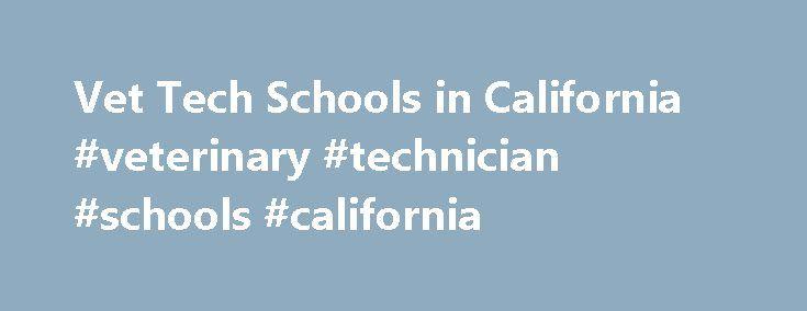 Vet Tech Schools In California Veterinary Technician Schools