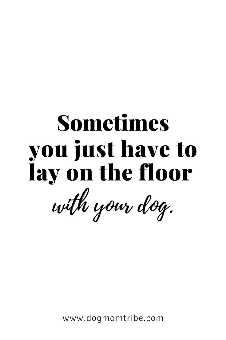 Photo of Dog Quotes for Dog Lovers