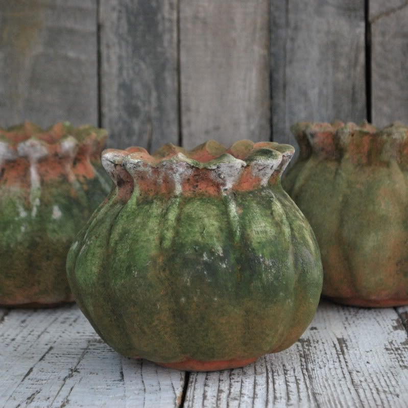 how to grow poppies in pots