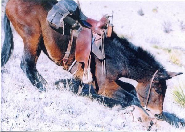 1/27/2005: Mule versus mountain lion - The Cellar