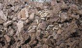 Como Acabar Con Las Termitas En La Pared Foto De Termitas Subterraneas Tecma Termitas Eliminar