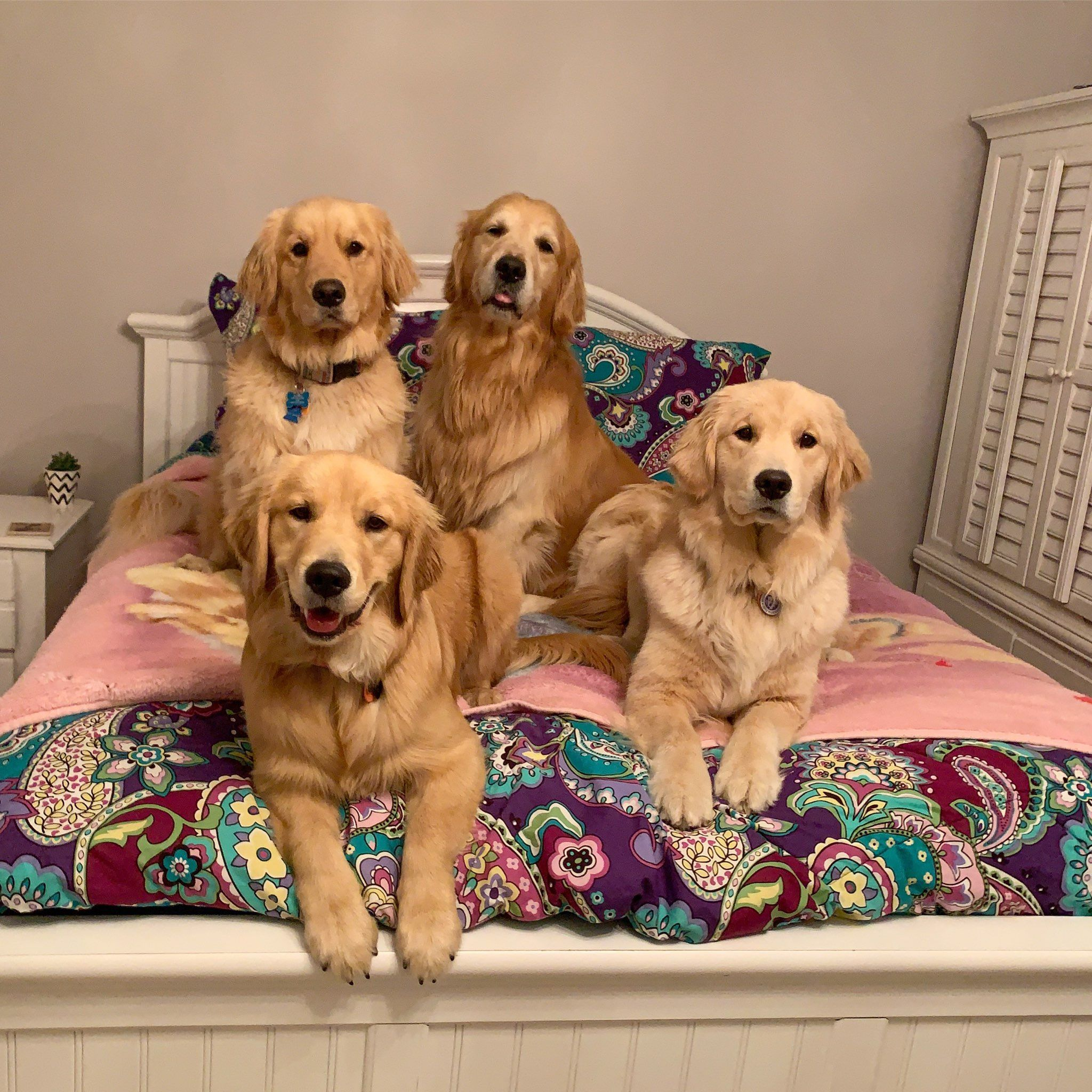 Looks Like My Daughter Will Be Sleeping On The Floor Tonight Cute Puppies Beautiful Dogs Dogs Golden Retriever